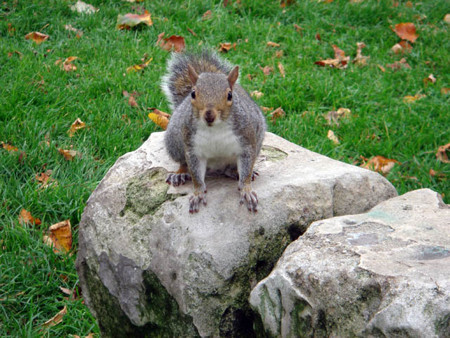 Squirrel on boundary marker